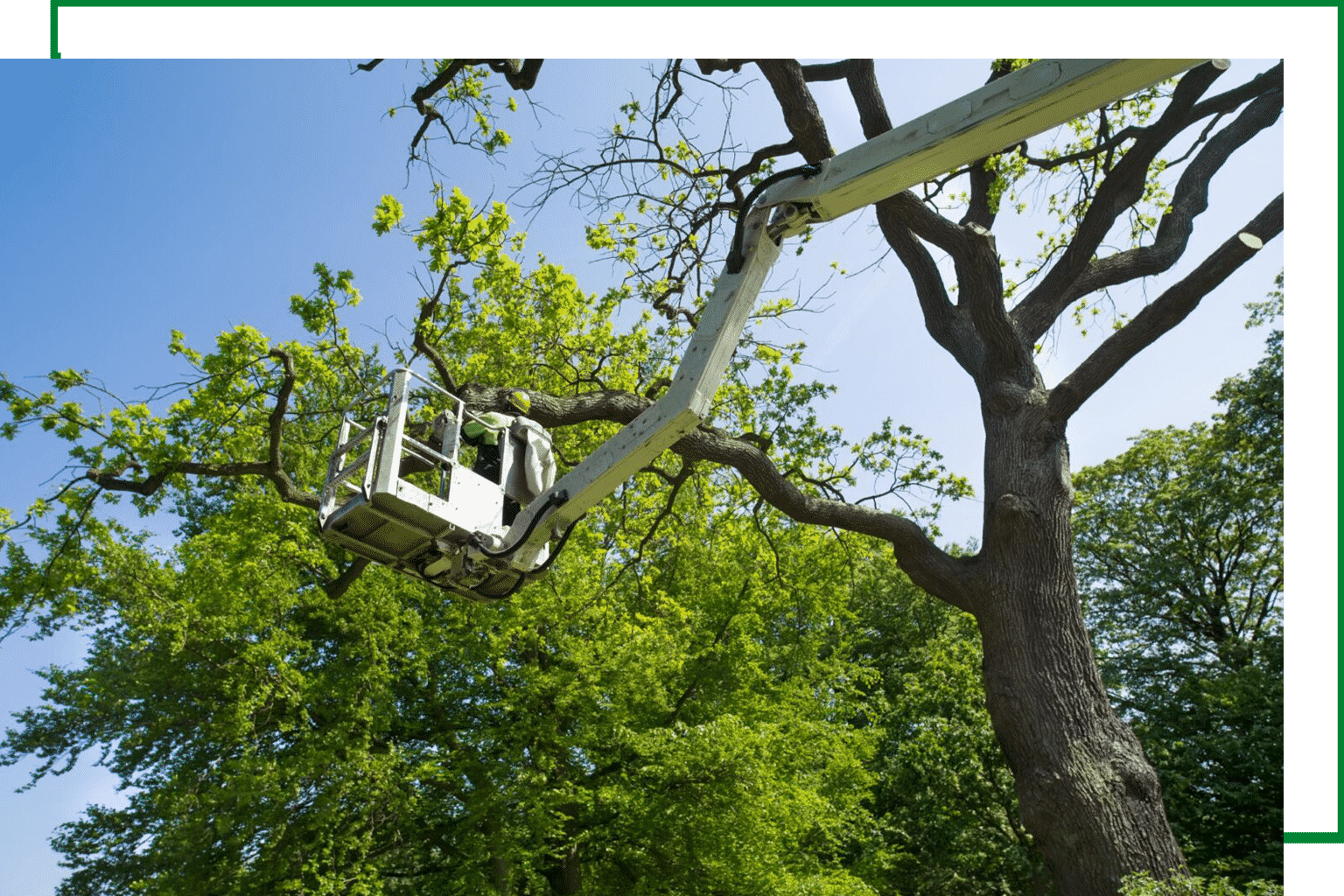 Tree-Removal-Service