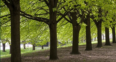 Tree-Service-Sacramento-Image