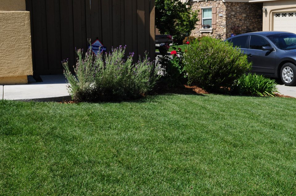 Tree-Service-Sacramento